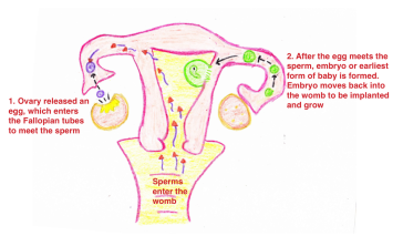 fibroid-and-infertility-photo-1
